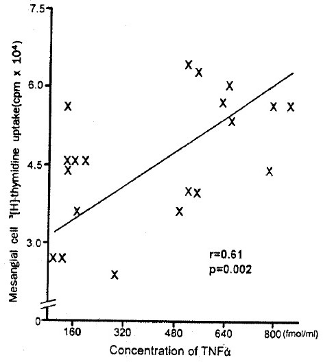 Correlation between concentrations of TNF α in PBMC culture supernatant and mesangial cell 3[H]-thymidine uptake.