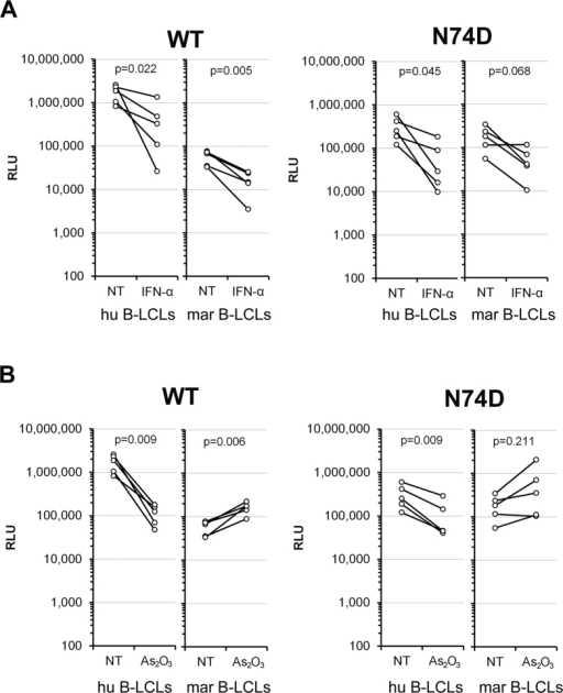 Characterization of the post-entry block to HIV-1 in B-LCLs.Human (hu) or marmoset (mar) B-LCLs were challenged with single-cycle HIV-1 WT or N74D capsid mutant luciferase reporter viruses pseudotyped with VSV-G. (A) Cells were pre-treated with 500 U/ml of universal IFN-α for 24 hours before the infection. (B) Cells were pre-treated with 4 μM As2O3 for 3 hours before the infection. The cells were maintained in the presence of the treatment for 24 hours after the viral challenge. Forty-eight hours post-challenge, the infectivity of the viruses was determined by measuring the relative luciferase activity (RLU) in the cells. The results of five independent experiments are shown. Reported p-values (2-tailed) were obtained with a paired t-test (untreated versus treated cells). NT, no treatment.