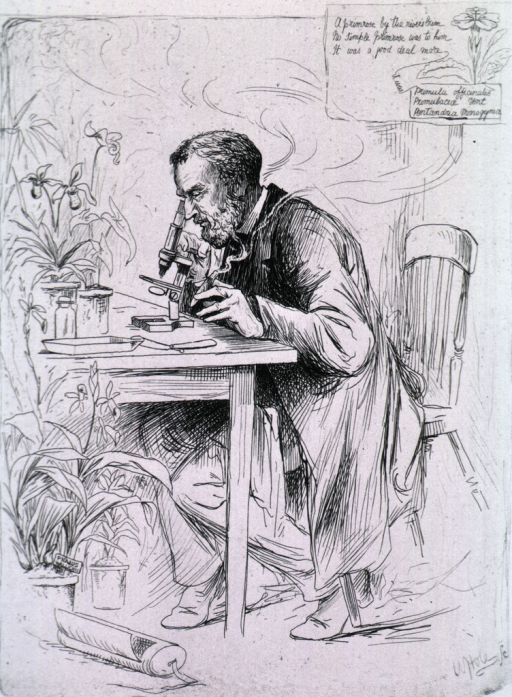 <p>Full length, seated at microscope, left profile.</p>