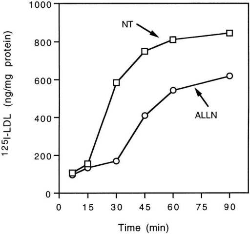 ALLN transiently inhibits uptake of 125I-labeled LDL.  Expression of LDL receptors was induced in normal human fibroblasts by standard methods. The cells were preincubated in  the presence (○) or absence (□) of 500 μM ALLN for 1 h before  the addition of 15 μg/ml of 125I-labeled LDL ± 50-fold excess of  cold LDL. The cells were then incubated further for the indicated  time before the amount of internalized [125I]LDL was measured  as described. Each value is the average of duplicate measurements.