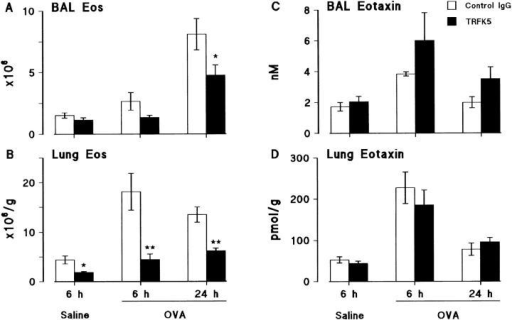 Effect of an anti–IL-5 antibody, TRFK5, on eosinophil numbers in (A) BAL and (B) lung tissue, and eotaxin levels in (C) BAL fluid and (D)  lung tissue after allergen challenge. Sensitized guinea pigs were injected i.v. with control rat IgG or TRFK5 (0.3 mg/kg) 30 min before aerosol exposure  to saline or allergen. Results are presented as mean±SEM (n = 5–6 animals/group) and significant differences between control IgG and TRFK5-treated  groups are indicated as *P <0.05 and **P <0.005.