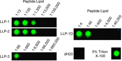 LLP peptides disrupt lipid membranes. Tb3+/DPA assay for peptide induced membrane permeation. Disruption of 90%POPC:10%POPG large unilamellar vesicles (LUV's) containing entrapped terbium and external DPA by LLP peptides is indicated by green Tb/DPA fluorescence under UV illumination.