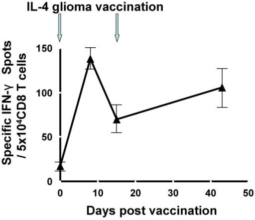 IL-4 gene transfected glioma cell vaccine elicited an IFN-γ response against EphA2 883–891 epitope. PBMC samples were obtained on days 1 (pre-vaccine on the day of the first vaccine), 8, 15 (on the day of the second vaccine), and 42, and saved as frozen cells until all these cells were thawed at the same time, cultured in the presence of 20 IU/ml hIL-2 and autologous glioma cells for 5 days, and evaluated for the frequency of IFN-γ-producing cells in response to T2 cells loaded with the HLA-A2-binding EphA2883–891 peptide using ELISPOT assay. Each well contained 5 × 104 CD8+ cells and each group was evaluated in triplicate. Specific IFN-γ spots were calculated by subtracting the average of control spots (triplicate variation within a group was less than 10% in non-peptide-loaded T2 cell groups) from the total numbers of spots in peptide-loaded groups. Values indicate averages of triplicate samples for each time point, and bars indicate standard deviations. The number of spots in each post-vaccine time point was at least three times the standard-deviation of the pre-vaccine value.