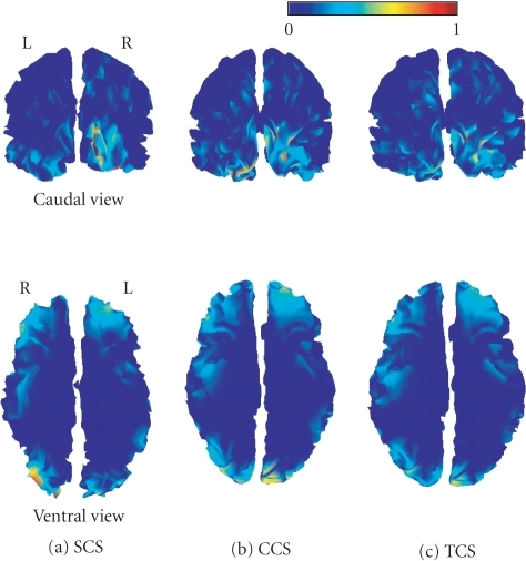 Caudal (upperrow) and ventral (lower row) views of the cortical source energy estimated atthe peak of the M170 for each of the three anatomical models: SCS (a), CCS (b),and TCS (c). Maps have been normalized to their maximum.