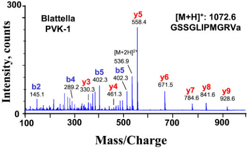 CID spectrum (ESI-QTOF MS) of Blattella germanica PVK-1 at [M+2H]2+ 536.9 ([M+H]+:1072.6). The y- and b-type fragment ions are labelled. Fragments were analyzed manually and the resulting sequence is given in the inset.