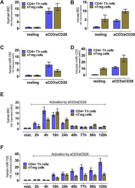 RT-PCR expression analysis of pre-mature BIC transcript and its processed microRNA miR-155 in mice and men.The BIC transcript is strongly up-regulated upon activation using anti-CD3/anti-CD28 mAb in human donors (A) and in C57/BL6 mice (B). Whereas, in C57/BL6 mice the BIC transcript as well as the matured miR-155 was found to be higher expressed in nTregs than in CD4+ Th cells (B) and (D) (n = 3). In human cells, BIC and the matured form miR-155 were not present in resting cells, but strongly elevated levels were found in Th cells as well as in nTreg cells after TCR activation (A) and (C) (n = 4). Analyzing the kinetic of BIC/miR-155 expression RNA was collected using an activation time course experiment. (E) The activation of human T cell populations showed a temporary activation of the BIC transcription. Whereas, the CD4+ Th cells reached their maximum after 4 h upon activation, the peak for nTreg cells is shifted to the 16 h time point. (F) The levels of matured miR-155 were found to permanently increase within time (until 120 h) in activated CD4+ Th cells, whereas in nTregs a plateau was reached after 24 h. All values were calculated as relative fold changes using the ddCT method. As normalizer RNA Pol II (human & mouse BIC) as well as U18 (human miR-155) and 5S (mouse miR-155) were used.