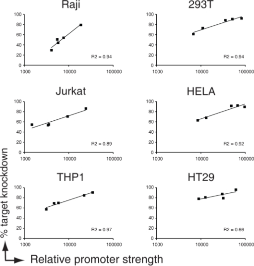 Promoter strength determines potency of shRNA-miRs.EGFP-expressing human immune cell types (Raji B, Jurkat T, and THP-1 monocytic cells) and adherent cell lines (293T, HeLa, and HT29 cells) were infected at an MOI of <0.2 with anti-EGFP shRNAs (left panels) expressed from a miR-30 backbone driven by various polymerase-II promoter. Cells were allowed to grow for 8 days and the expression of EGFP (to monitor knockdown) was assessed by flow cytometry. Relative promoter strength of the polymerase II promoters (mCherry Geo Mean) was measured from control vectors that lacked the miR30-backbone, since processing of shRNAs out of the miR30 backbone destabilized the transcript. Relative promoter strength is plotted against% EGFP knockdown in the indicated cellines. Trendlines and R2 values of fitted curves are indicated.