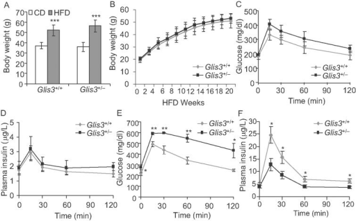 Glis3+/− mice develop diabetes in response to HFD-feedingA. Body weights of Glis3+/+ and Glis3+/− mice fed with a CD (n = 5) or HFD (n = 7) for 20 weeks. ***p = 0.0003 versus CD.B. Growth curve of Glis3+/+ (n = 8) and Glis3+/− (n = 12) mice fed with a HFD for 20 weeks.C,D. After 6 h fast, gavage GTT (1.5 g/Kg BW) was performed in Glis3+/+ and Glis3+/− mice fed with regular CD for 20 weeks. Plasma glucose (C) and insulin (D) were measured at time 0, 15, 30, 60 and 120 min after glucose injection. n = 5 for each group.E,F. Gavage GTT (2 g/kg BW) was performed in Glis3+/+ (n = 7) and Glis3+/− (n = 5) mice fed with a HFD for 20 weeks with 6 h fast. Plasma glucose (E) and insulin (F) were measured at indicated time points. Results were analysed by student's t-test and presented as the mean ± SE. Gavage GTT: *p < 0.05; **p < 0.01, versus Glis3+/+. Insulin during GTT: *p = 0.028, 0.029, 0.048, 0.045 at 15, 30, 60 and 120 min after glucose injection, respectively.