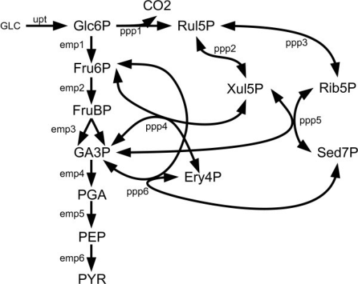 E.Coli EMP and PPP Metabolic Pathways. The Embden-Meyerhof and Pentose Phosphate metabolic pathways of Escherichia coli.