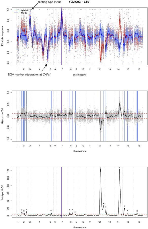 "Sequence analyses and X-pQTL detection exampleIn all panels, physical genomic coordinates are shown on the x-axes. The position of the gene (LEU1) is indicated by the purple horizontal line.Top panel: Frequency of the BY allele in the high (red) and low (blue) GFP population. SNPs are indicated by dots, and loess-smoothed averages as solid lines. Note the fixation for the BY allele in all segregants at the gene position as well as at the mating type locus on chromosome III, as well as the fixation for the RM allele at the SGA marker integrated at the CAN1 locus on the left arm of chromosome V.Middle panel: Subtraction of allele frequencies in the low from those in the high GFP population. SNPs are indicated by grey dots, with the loess-smoothed average indicated in black. Note that on average, there is no difference between the high and the low populations. Positive difference values correspond to a higher frequency of the BY allele in the high GFP population, which we interpret as higher expression being caused by the BY allele at that locus. The red horizontal lines indicate the 99.99% quantile from the empirical """" sort experiments. They are shown for illustration only and were not used for peak calling. The blue vertical boxes indicate positions of genome-wide X-pQTL, with the width representing the 2-LOD drop interval.Bottom panel: LOD scores obtained from MULTIPOOL 16. The red horizontal line is the genome-wide significance threshold (LOD = 4.5). Stars indicate X-pQTL called by our algorithm; these positions correspond to the blue bars in the middle panel. For this gene, 14 X-pQTL are called."