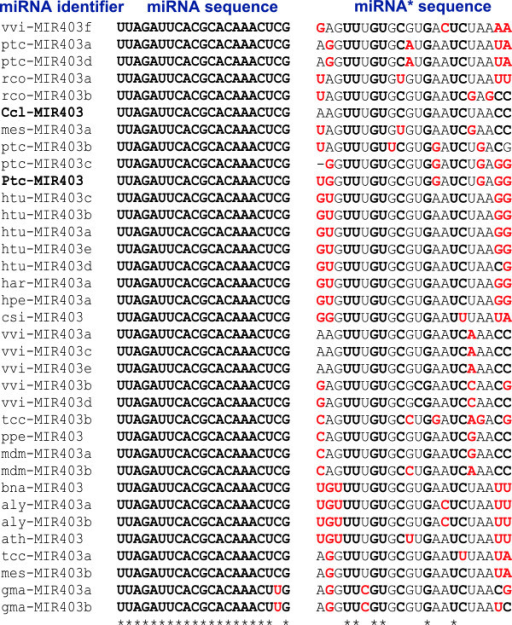 Diversity of miR403 sequences. CLUSTAL alignment with sequences from miRBase as well as from other sources (in bold). Residues in red are not conserved among the family members.