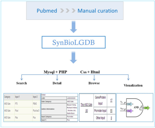 Overview of the SynBioLGDB database.