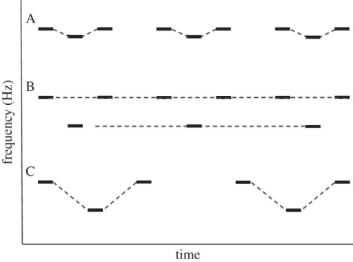 The effects of pitch proximity and tempo on determining the number of auditory objects in sequential streams of sounds. (A) When a higher tone repeats at a regular interval and a lower tone repeats at half the tempo of the higher tone, and they are arranged as in (A), all of the tones are perceived to come from a single sound source (as depicted by the dotted lines) and a gallop rhythm is heard. (B) When the higher and lower tones are sufficiently separated in frequency, they can no longer be integrated into a single stream. Two auditory objects are heard, one a repeating high tone and one a repeating low tone, and no gallop rhythm is perceived. This demonstrates that the auditory system expects a single sound source to remain reasonably consistent in pitch. (C) When the tempo of the sequence in (B) is slowed down, again the two pitches can be integrated into a single auditory object, and the gallop rhythm is heard again, consistent with the idea that the auditory system expects an auditory object to change pitch slowly. (Adapted from [41].)