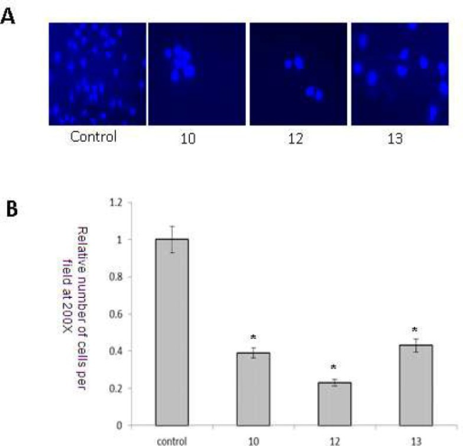 Anti-invasive potential of synthetic compounds 10, 12 and 13 (8 μM) by cell migration assay. * Significantly different from untreated control cells (P<0.05