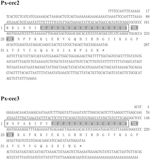 Nucleotide sequence of Px-cec2 and Px-cec3 cDNA from P. xylostella and their deduced amino acids.The putative signal peptide is boxed, while the mature peptide is indicated in bold type, while the predicted transmembrane domain is shaded. The stop codon is marked as an asterisk.