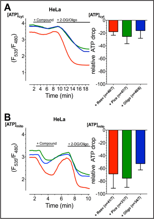 Representative curves (left panels) show cytATP (A) and mtATP (B) ratio signals of HeLa cells, measured by AT1.03 targeted to cytosol or mitochondria, respectively, stimulated with first 100 µM resveratrol (red curves), 100 µM piceatannol (green curves), or 10 µM oligomycin A (blue curves) and afterwards with 2.5 mM 2-DG and 10 µM oligomycin A in order to gain a complete depletion of ATP. Bars (right panels) reveal average ∆ ratio signals to resveratrol (red columns; cytATP: n=40/7, mtATP: n=41/7), piceatannol (green columns; cytATP: n=47/7, mtATP: n=31/7) or oligomycin A (blue columns; cytATP: n=48/6, mtATP: n=34/7), presented as percentage of complete ATP depletion. The cells' response to the combination of 2.5 mM 2-DG and 10 µM oligomycin A was set to 100 %.