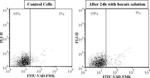 Caspase activation following incubation with phosphate or borate-buffered solution. No increase in cells staining positive for FITC-VAD-FMK was observed after cells were incubated for 24 h with either phosphate, borate-buffered solutions, or soaked lenses. Dot plots are representative of the three experiments that were performed.