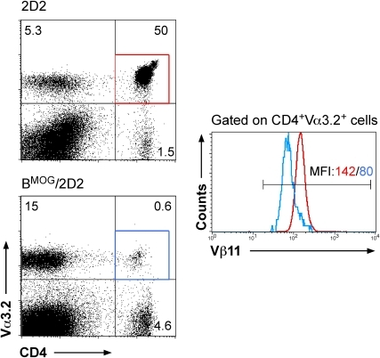Residual MOG-specific T cells in BMOG/2D2 mice downregulate Vβ11.LN of WT 2D2 and BMOG/2D2 mice were analyzed by FACS analysis for presence of CD4, Vα3.2 and Vβ11. Cells were analyzed for expression of Vα3.2 vs CD4 (dot blots). Cells were then gated on CD4+ Vα3.2+ T cells and the percentage of Vβ11-expressing cells among this population is shown by histogram overlay. The red line in the histograms refers to the red gate of CD4+ Va3.2+ cells in 2D2 mice, the blue line refers to CD4+ Va3.2+ cells (blue gate) of BMOG/2D2 mice. Colored numbers above the marker line indicate MFI (mean fluorescence intensity) of anti-Vβ11-PE for the respective populations.