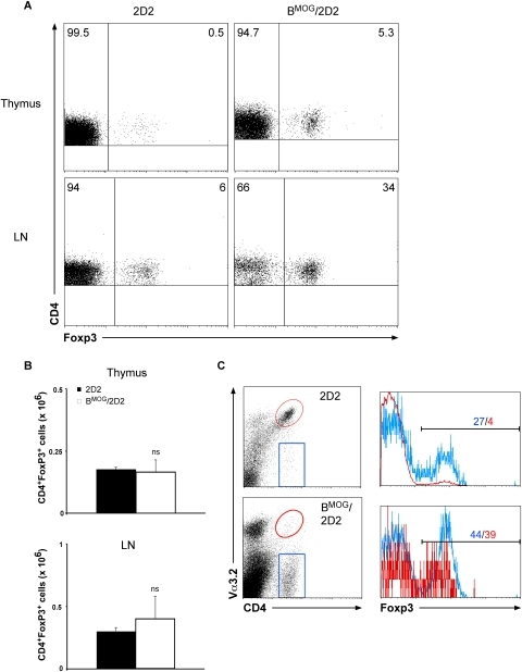 FACS analysis of Foxp3-expressing T cells in BMOG/2D2 mice.(A) Thymus and LN of WT 2D2 and BMOG/2D2 mice were analyzed for expression of Foxp3 by intracellular FACS staining. Genotypes and antibodies used are as indicated. Cells were gated on CD4+ cells. Numbers in quadrants indicate percent positive cells. (B) Total numbers of CD4+ Foxp3+ T cells from thymus and LN were calculated. Data represent mean values ± SEM of several individual experiments. ns, not significant. (C) LN cells from BMOG/2D2 and WT 2D2 mice were gated on CD4+ Va3.2+ or CD4+ Va3.2− T cells, respectively, and percentage of Foxp3-expressing cells among these populations is shown by histograms. The blue line in the histograms refers to the blue gate of CD4+ Va3.2− cells, the red line refers to CD4+ Va3.2+ cells (red gate). Colored numbers above the marker line indicate percent positive cells for the respective populations.
