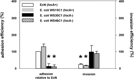 Inhibitory effects of focA-positive and focA-negative E. coli isolates on Salmonella Typhimurium invasion.Confluent monolayers of IPEC-J2 cells were pre-incubated with E. coli Nissle 1917 (EcN, focA-positive strain), E. coli WS15C1 (focA-positive strain), E. coli WS30C1 (focA-negative strain) and E. coli WS46C1 (focA-negative strain) using an MOI of 100∶1 E. coli to host cells. After two hours, cells were washed and adhesion efficiencies of E. coli isolates were determined (left side); alternatively, cells were washed after two hours and infected with Salmonella Typhimurium using an MOI of 100∶1 Salmonella to host cells (right side). Adhesion levels in percent (%) were expressed relative to adhesion of EcN. Invasion levels in percent (%) were expressed relative to Salmonella invasion without pre-incubation with bacteria (Salmonella mono-infection). The data are the mean ± S.E.M. of at least three separate experiments in duplicate wells. * = p<0.01 compared to EcN adhesion (left side) or Salmonella mono-infection (right side).