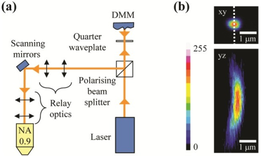 Conventional implementation of deformable membrane mirror (DMM). (a) Schematic diagram of conventional DMM implementation. (b) PSF2P of the microscope including the DMM in control conditions in the focal plane (Top) and in a plane comprising the optical axis (Bottom) indicated by the dashed line on the top panel.