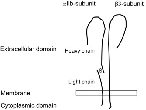 A schematic structure of platelet integrin αIIbβ3. The αIIb subunit is composed of a heavy and a light chain. The light chain contains a cytoplasmic tail, a transmembrane helix, and an extracellular segment that is disulfide linked to the heavy chain, which is entirely extracellular. The β3 subunit is a single polypeptide chain. The 2 subunits assemble into the divalent, cation-dependent heterodimer.