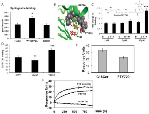 FTY720 binds I2PP2A/SETA. Binding of endogenous sphingosine was detected by LC/MS/MS in A549 lung cancer cells after overexpression and pull-down of vector, WT-I2PP2A or K209D-I2PP2A-GFP, using anti-GFP columns.B. Molecular docking predicts various residues of I2PP2A/SET that may be involved in FTY720 binding, including K209 and Y122. The 1-OH of FTY720 is expected to interact with the K209, which might form a cationic/π-arene interaction with the Y122 to form a possible gate for FTY720/ceramide binding.C. Binding of I2PP2A/SET to B-FTY720 (1, 5 or 10 µM) was detected using avidin pull-down (elution) followed by Western blotting with the anti-I2PP2A/SET antibody. Structure of B-FTY720 is shown. Full blots can be seen in Supporting Information Fig S15.D. Binding of B-FTY720 (10 µM) to WT-I2PP2A/SET compared to K209D- or Y122C-I2PP2A-GFP was measured as described in Materials and Methods section.E,F. Binding of purified human I2PP2A/SET to C18-ceramide and FTY720 (E) or P-FTY720 (F) were measured using SPR. Saturation values determined for 1 µM I2PP2A/SET injected over the respective active surface. The average response for 1 µM I2PP2A/SET binding to C18-ceramide, FTY720 or P-FTY720 over the control POPC:POPE surface, performed in triplicate, were shown. Error bars represent s.d. (p < 0.05, p < 0.01, p < 0.001 were considered significant).