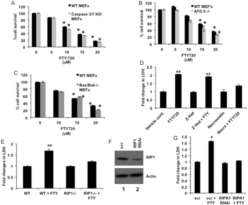 FTY720 mediates cell death via PP2A/RIPK1-dependent necroptosisA–C. Effects of FTY720 at various concentrations on growth of MEFs obtained from caspase 3/7−/− (A), Bax/Bak−/− (B) or ATG5−/− (C) mice were measured using MTT assays compared to vehicle-treated controls.D. Effects of Z-VAD or necrostatin on FTY720-mediated cell death were measured in A549 cells compared to vehicle treated controls. Cell death was measured by LDH release in the media.E. Effects of FTY720 (15 µM) on cell death were measured in WT and RIPK1−/− MEF's compared to vehicle-treated controls.F,G. Roles of siRNA-mediated knockdown of RIPK1 compared to Scr-siRNAs-transfected controls, confirmed by Western blotting (F), in FTY720-mediated cell death were measured by detection of LDH release (G). Error bars represent s.d. (*p < 0.05, **p < 0.01). Full blots can be seen in Supporting Information Fig S16.