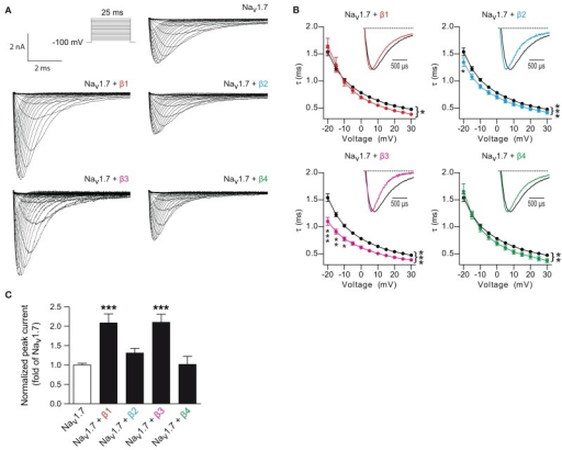 β-subunits regulate Nav1.7 currents. (A) Typical whole-cell Na+ currents of HEK293 cells transfected with Nav1.7 alone or Nav1.7 co-expressed with individual β-subunits elicited with a typical current-voltage protocol. (B) Voltage-dependence of current decay of Nav1.7 alone compared to Nav1.7 with each individual β-subunit. Inset: Normalized representative current traces of Nav1.7 elicited by test pulses at 0 mV. Co-transfection of the β1- (p = 0.011, n = 39), β2- (p < 0.0001, n = 25), β3- (p < 0.0001, n = 16), and β4-subunit (p = 0.006, n = 13) decreased the time constant decay as compared to Nav1.7 alone (n = 81). Two-Ways ANOVA and Bonferroni post-hoc tests. Data are expressed as mean ± s.e.m. (C)INa densities from HEK293 cells transfected with Nav1.7 alone or co-transfected with individual β-subunits. β1- (n = 55) and β3-subunits (n = 34), but not β2- (n = 67) nor β4-subunits (n = 27), increased the Nav1.7 current densities. p < 0.0001 for β1- and β3-subunits with One-Way ANOVA followed by Bonferroni post-hoc tests. Data are expressed as mean ± s.e.m. and were normalized to Nav1.7 alone for each experiments. Values can be found in Table 1. *p < 0.05, **p < 0.01 and ***p < 0.001.