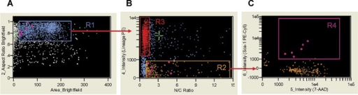 Analysis of nuclear to cytoplasmic ratio by ImageStream system. Single, round cells from region R1 (A) were visualized based on their nuclear to cytoplasm ratio and Lin markers expression (X- and Y- axis, respectively (B). Cellular populations were gated including Lin+ cells with low nuclear to cytoplasmic ratio (0.936 ± 0.016) (region R3, red) and Lin− cells with high N/C ratio (3.485 ± 0.248) (region R2, orange). Objects from region R2 were farther analysed for their CD45 and Sca-1 expression (X- and Y-axis, respectively (B). Cells with VSELs' phenotype (Sca-1+/Lin−/CD45−) and characterized by higher N/C ratio (1.471(0.171) were included in region R4 (magenta; C) and visualized on the other plots as diamonds (magenta). N/C ratio was calculated as nuclear area divided by cytoplasmic area computed from nuclear (7-AAD) and brightfield images. Signals of brightfield, Lin-PE and 7-AAD were collected by the IS in channels 2, 4 and 5, respectively. Mean (± S.E.M.) values of N/C ratio were calculated using IDEAS software.