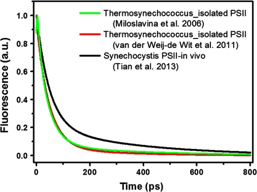 Picosecond kinetics of isolated PSII core complexes from Thermosynechococcus, reconstructed from (Miloslavina et al. 2006) (black solid) and (van der Weij-de Wit et al. 2011). The decay curve presented in (Miloslavina et al. 2006) was reconstructed based on the DAS shown in Fig. 7 of that work, and only τ1–τ5 are included in the calculation. The decay curve from (van der Weij-de Wit et al. 2011) was reconstructed based on the compartmental scheme shown in Fig. 6 in that article and the initial excitation fractions therein. Excitation wave lengths were 663 and 400 nm, respectively, but these differences are not expected to significantly influence the overall kinetics. The dotted line represents the fluorescence kinetics of PSII core in vivo for a Synechocystis mutant (excitation wavelength 400 nm) (Tian et al. 2013)