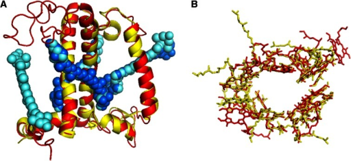 Overlap of the structural models of LHCII (Liu et al. 2004) and CP29 ((Pan et al. 2011)). aSide view (from within the membrane) on the protein backbone of LHCII (red) and CP29 (yellow) and the xanthophylls of LHCII (light blue) and CP29 (dark blue). Main differences are the lack of the N-terminal part of CP29 which apparently was cleaved off during crystallization and the lack of VX in CP29. For the rest, both proteins show very similar structures. bTop view showing that the Chl organization in LHCII (red) and CP29 (yellow) is rather similar although not identical