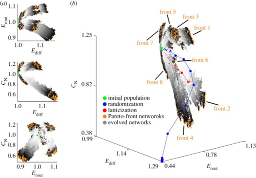 Evolved brain networks located within the LAU1 efficiency-complexity morphospace. (a) Two-dimensional projections of the three-dimensional morphospace. The coordinates (Ediff, Erout, CN) = (1, 1, 1) are the coordinates corresponding to the LAU1 network, and therefore the initial population is located very close to those coordinates (cf. figure 3). All points indicate the regions of morphospace explored by eight independent runs of the optimization algorithm, all starting with the same initial population but driven by eight distinct objective functions (see §2e(ii)). The grey-scale assigned to each network indicates the epoch in which it was created, with light grey corresponding to early epochs and darker grey to later epochs. Orange points correspond to the Pareto-front networks of the last epoch of each front. (b) Three-dimensional efficiency-communication morphospace. Blue and red points show the average trajectory of a randomized and latticized brain network, respectively, which are not subjected to the selective pressures imposed when exploring the different fronts. The grey-scale assigned to each network indicates the epoch in which it was created, with light grey corresponding to early epochs and darker grey to later epochs. Orange points correspond to the Pareto-front networks of the last epoch of each front.