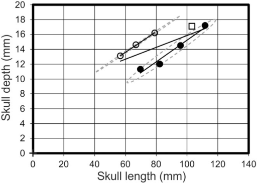 Skull length vs skull depth.A graph demonstrating the spread of data between morphotype one (open circles), morphotype two (filled circles) and Pterodactylus antiquus (Open square) in respect to their skull length and skull depth. Solid black lines = regression lines for respective morphotypes; dashed grey lines = 95% confidence limits.