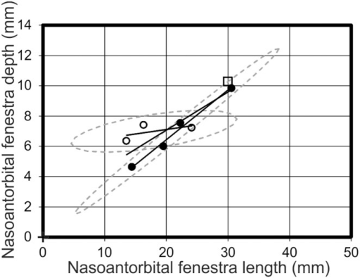 Nasoantorbital fenestra length vs nasoantorbital fenestra depth.A graph analysing the relationships of nasoantorbital fenestra length and depth dimensions, which demonstrates intersecting regression lines for morphotype one (open circles) and morphotype two (filled circles), Pterodactylus antiquus (open square) lies closest to morphotype two. Solid black lines = regression lines for respective morphotypes; dashed grey lines = 95% confidence limits.
