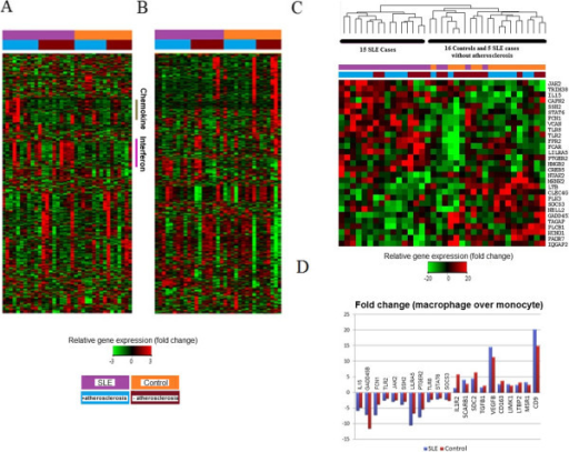 analysis of the dbr 1 gene Analysis of the expression of cla1  a gene previously isolated from arabidopsis, encodes the first enzyme of the 2-c-methyl-d-erythritol-4-phosphate pathway.