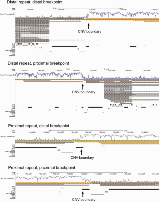 "Analysis of human CNV boundary regions. The four panels show the hg18 reference genome (UCSC genome browser) at the distal and proximal boundaries of the distal and proximal assembled β-defensin repeat regions (see fig. 1). In all four cases, the boundary of the β-defensin CNV, as measured by the correlation with copy number measured by PRT (track ""Gen_PRT correlation 2""), is at the LTR65 element."