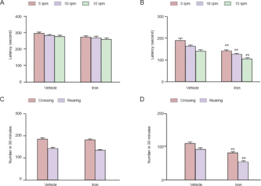 Increased neonatal iron intake resulted in age-related behavior abnormalities.(A, B) Rotarod test in young (170 days old) and aging (615 days old) rats, respectively; (C, D) open field test in young (170 days old) and aging (615 days old) rats, respectively. Data are expressed as the mean ± SEM. (A, C) There were 20 young rats: 10 rats with neonatal iron intake and 10 vehicle-treated rats (B, D) and 20 aging rats: 10 rats with neonatal iron intake and 10 vehicle-treated rats. Differences were determined using the two-tailed Student's t-test for comparison between two groups and an analysis of variance and Bonferroni post hoc test for comparison between more than two groups. **P < 0.01, vs. aging rats treated with vehicle. rpm: Rotation/min.