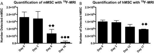 Comparison of 19F-labeled cell detection in two transplantation models over time.(A) Following implantation of 2x106 mMSC, 19F-MRI was used to quantify the number of cells remaining over 16 days. By day 16, only 2/7 mice had any detectable signal remaining. A significant difference from day 0 is denoted by +, from day 3 by ◆, and from day 9 by ■. (B) The number of detectable cells over a similar time period following a transplant of 1.5x106 hMSC. 19F signal was found to decrease at a slower rate, with observable signal in all mice at endpoint. Statistical significance is denoted in the same way as A.