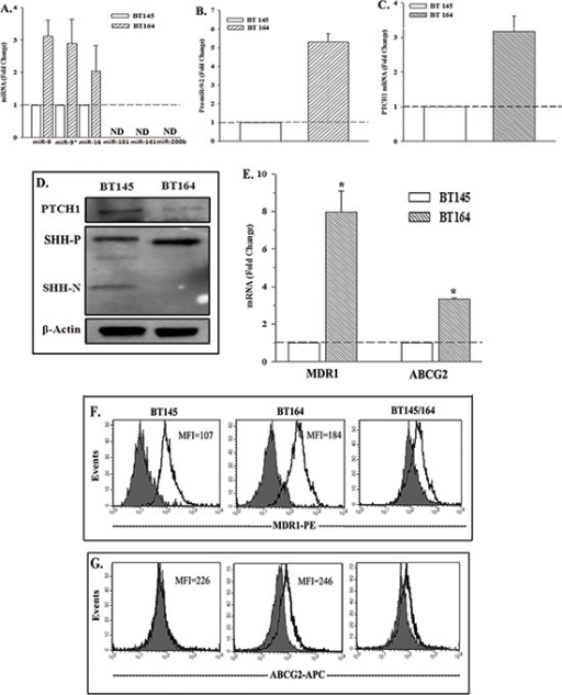 Expressions of PTCH1, miR-9-2 and drug transporters in naïve and recurrent GBM cells from patients(A) Real-time PCR was performed for the miRNA, predicted for PTCH1 (Figure 2A). The results are presented as the mean fold change ±SD, n = 4. (B) Real time PCR for miR-9-2 was performed in four independent studies using RNA from BT145 and BT164 cells. The results of BT145 were normalized to 1 and then used to calculate the fold change for the values of BT164, mean±SD. (C) Real time PCR were performed for PTCH1 as for 'B' and the results are similarly presented. (D) Whole cell extracts from BT145 and BT164 were studied by western blot for PTCH1, SHH-P (precursor), SHH-N (mature) and β-actin. (E) Real time PCR was performed for MDR1 and ABCG2 mRNA with total RNA from BT145 and BT164. (F & G) Flow cytometry was performed for membrane P-glycoprotein (MDR1) (F) and ABCG2 (G). The right panels show the overlay between the two patients. *p < 0.05 vs. BT145.