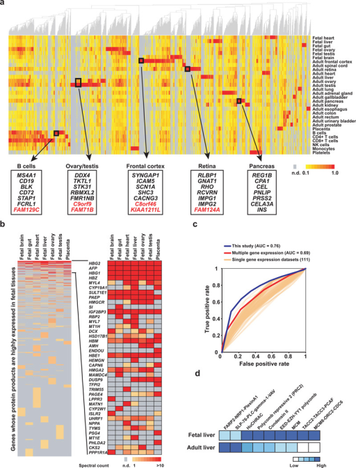 Landscape of the normal human proteomea, Tissue-supervised hierarchical clustering reveals the landscape of gene expression across the analyzed cells and tissues. Selected tissue-restricted genes are highlighted in boxes to show some well-studied (black) as well as hypothetical proteins of unknown function (red). The color key indicates the normalized spectral counts per gene detected across the tissues. b, A heat map showing tissue expression of fetal tissue-restricted genes ordered by average expression across fetal tissues (left) and a zoom-in of the top 40 most abundant genes (right). The color key indicates the spectral counts per gene. c, An ROC curve showing a comparison of the performance of the current dataset (blue, area under the curve = 0.762) with 111 individual gene expression datasets (orange) and an composite of the 111 individual datasets (red, area under the curve = 0.692). d, Developmental stage-specific differential expression of protein complexes in fetal and adult liver tissues. Heat map shows protein complexes with less than or equal to half of their subunits expressed in one of the tissue types. The darker the color, the greater the number of expressed subunits.
