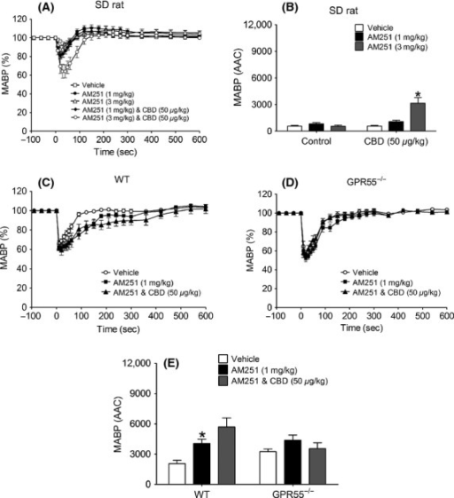 Hemodynamic responses to AM251 (1 and 3 mg kg−1) in the absence and presence of CBD (50 μg kg−1) in normotensive anesthetized rats (A and B) and WT and GPR55−/− mice (C-E). Baseline MABP's and HR's for each group of rats were AM251 alone (123 ± 5 mmHg and 338 ± 6 bpm; n = 7); CBD and AM251 (131 ± 2 mmHg and 350 ± 5 bpm; n = 8), respectively. Baseline MABP's and HR's for each group of WT mice were AM251 alone (87 ± 4 mmHg and 329 ± 6 bpm; n = 8); CBD and AM251 (86 ± 3 mmHg and 323 ± 4 bpm; n = 8), respectively. Baseline MABP's and HR's for each group of GPR55−/− mice were AM251 alone (89 ± 3 mmHg and 339 ± 5 bpm; n = 8) and CBD and AM251 (87 ± 3 mmHg and 329 ± 5 bpm; n = 8), respectively. Values shown are mean ± SEM. *P < 0.05 compared to vehicle response.