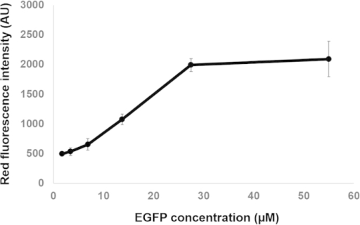 Correlation between EGFP concentration and red fluorescence intensity following irradiation.EGFP was diluted in PBS buffer at the following concentrations: 0.875, 1.7, 3.4, 6.8, 13.75, 27.5, 55 μM. All photoconversion and imaging parameters were kept similar for all tested EGFP concentrations. Data are from 3 independent experiments.