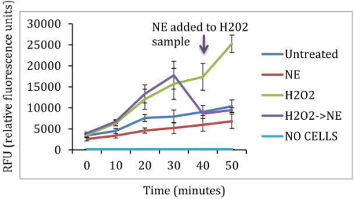 ROS generation measured by H2DCFDA. As expected, treatment with hydrogen peroxide resulted in greater ROS generation. Treatment with norepinephrine resulted in significantly less ROS generation than in untreated cells (p<0.01). Norepinephrine treatment after hydrogen peroxide treatment resulted in decreased ROS generation, however this different was not significant (p=0.14). H2O2: Hydrogen Peroxide; NE: Norepinephrine.