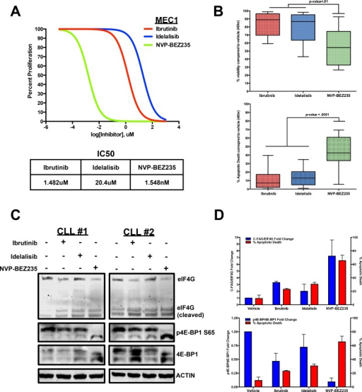 CLL apoptosis corresponds with eIF4G cleavage and 4E-BP1 dephosphorylationA. Dose-dependent treatment analysis of Ibrutinib, Idelalisib, and NVP-BEZ235 in the MEC1 CLL cell line to compare the IC50 for each inhibitor. B. Annexin V/DAPI apoptotic assay comparing 10uM Ibrutinib, 10uM Idelalisib, and 10uM NVP-BEZ235 treatment in CLL cells co-cultured with Huh7.5 cells (n = 15). Based on the results, NVP-BEZ235 was able to cause more apoptotic death during the 48hr period. C. At 6 hours, 10uM NVP-BEZ235 causes greater dephosphorylation of 4E-BP1 as well as greater cleavage of eIF4G in HS-5 co-cultured CLL cells compared to 10 uM Ibrutinib and 10uM Idelalisib. D. Decreasing 4E-BP1 phosphorylation and increasing eIF4G cleavage correspond with higher apoptotic death in primary CLL samples (errors bars = S.E.M.).