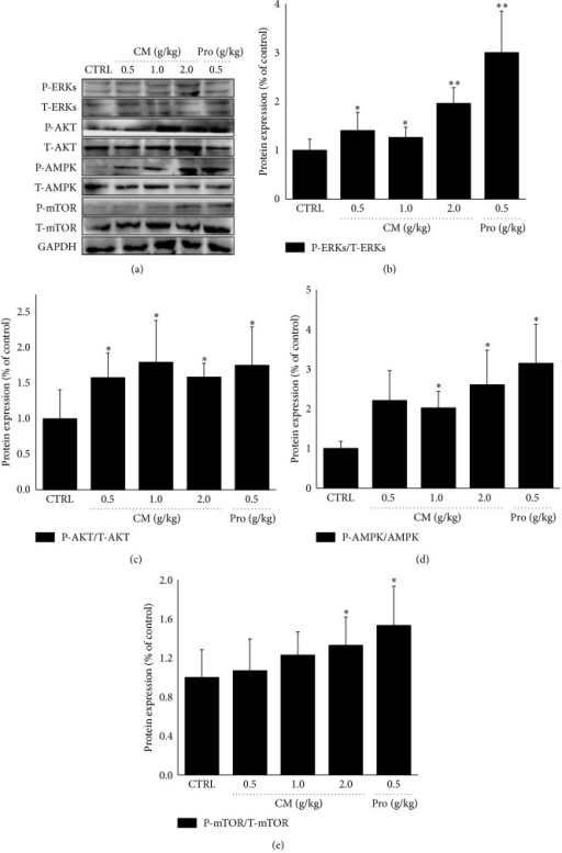 Mice were treated with Cordyceps militaris fruit body extract (0.5 g/kg, 1.0 g/kg, and 2.0 g/kg) and Rhodiola rosea (0.5 g/kg) for 14 days. After 20 min swimming, the activations of ERKs, AKT, mTOR, and AMPK in liver tissue were detected via western blot. Quantification data of the expression of P-ERKs, P-AKT, P-mTOR, and P-AMPK were normalized by corresponding T-ERKs, T-AKT, T-mTOR, and T-AMPK. Data are expressed as mean ± S.D. (n = 6) and analyzed using one-way ANOVA followed by Dunn's test. ∗P < 0.05 and ∗∗P < 0.01 versus control group.