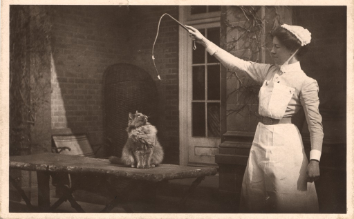 <p>A black and white photograph featuring a nurse playing with a cat. She is holding a cat toy on a long string. The cat is sitting on the table, looking at the toy.</p>