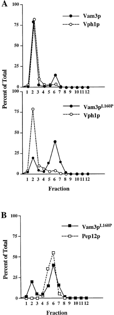 Localization of  Vam3 mutant proteins.  Cleared cell lysates generated  from vam3Δ (TDY2) cells  containing either wild-type  VAM3 (pVAM3.414) or the  vam3L160P mutant (pVAM3L160P.414) were loaded onto  the top of an Accudenz step  gradient and centrifuged to  equilibrium. Fractions 1–12  were collected from the top  of the gradient. Proteins  were precipitated from the  fractions and then separated  by SDS-PAGE and transferred to nitrocellulose.  Vam3p, Vph1p, and Pep12p  were detected by immunoblotting and visualized by  ECL fluorography. The distribution of both wild-type and  mutant (Vam3pL160P) Vam3p  and Vph1p are shown graphically in A and the colocalization of Vam3pL160P and  Pep12p are shown in B.