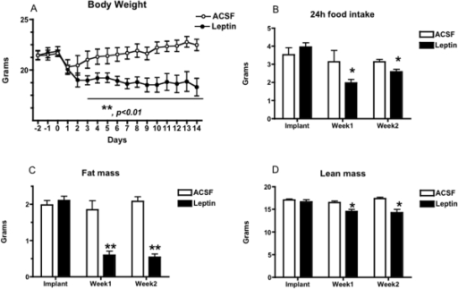 Body Weight, Food Intake, And Body Composition In Leptin Treated MKR Mice.Two week third intracerebroventricular leptin treatment (filled symbols) reduced body weight gain (A), 24 h daily food intake (B), fat mass (C) and produced a small reduction in lean mass (D) in male MKR mice, relative to artificial cerebrospinal fluid (ACSF) vehicle treated controls (open symbols). All data presented as means ± SEM, N = 6/group. * p<0.05, ** p<0.01.