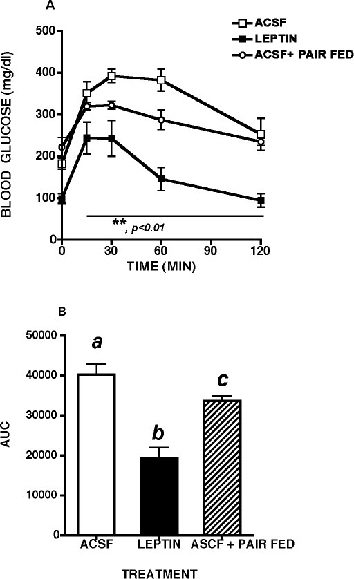 Glucose Tolerance Tests In Leptin And Vehicle Treated MKR Mice.Two week intracerebroventricular leptin treatment significantly improved glucose tolerance in male MKR mice relative to artificial cerebrospinal fluid (ACSF) vehicle treated controls and pair fed, ACSF treated MKR mice. A. Intraperitoneal glucose tolerance test (ipGTT, 2 g/kg), B. Area under the curve (AUC) during ipGTT. All data presented as means ± SEM, N = 6–7/group. * p<0.05, ** p<0.01.